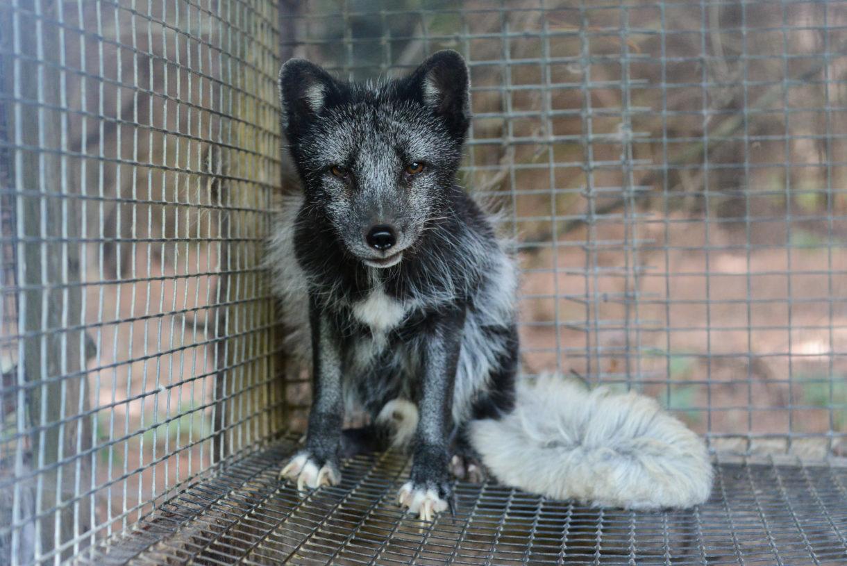 OnlineretailerforPrada, Gucci, Michael Kors,and Burberry goes fur-free
